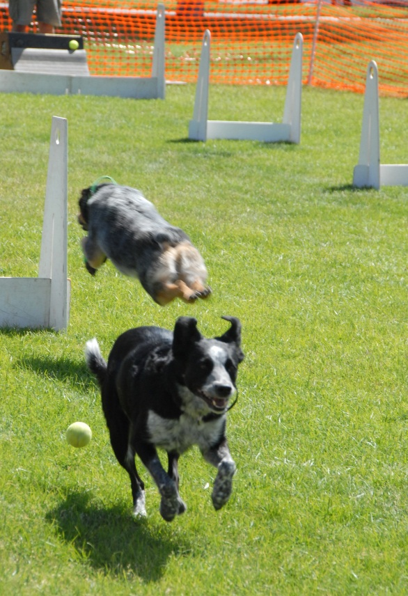 Flyball 4