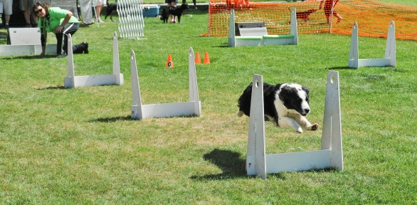 Flyball 3